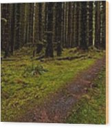 Hoh Rainforest Road Wood Print