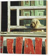 Hoi An Dog 02 Wood Print