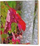 Holey Fall Wood Print