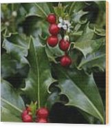 Holiday Holly Wood Print