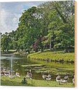 Holkam Park Wood Print