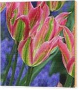 Holland Tulips Wood Print