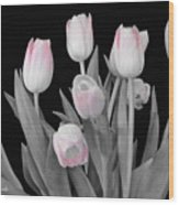 Holland Tulips In Black And White With Pink Wood Print