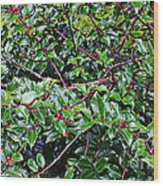 Holly Bush - Wood Print