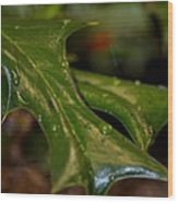 Holly Leaf Abstract Wood Print