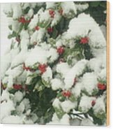 Holly Tree With Snow Wood Print