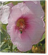 Hollyhock And Bee Wood Print