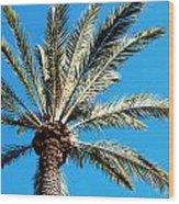 Hollywood Palm Wood Print