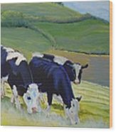 Holstein Friesian Cows Wood Print
