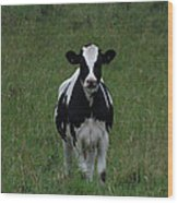 Holstein Hello Wood Print