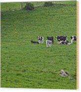 Holsteins Wood Print