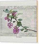 Ribes Sanguineum - California Currant Wood Print