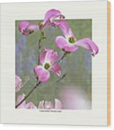 Flowering Dogwood - 'cherokee Chief' Wood Print by Saxon Holt