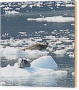 Home Home On The Ice Wood Print