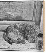 Homeless Dog Wood Print