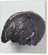Homo Sapiens Cranium (omo 2) Wood Print