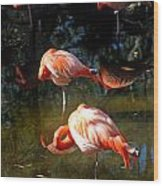 Homosassa Springs Flamingos 5 Wood Print