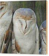 Homosassa Springs Snowy Owls 1 Wood Print