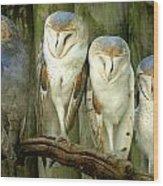 Homosassa Springs Snowy Owls 2 Wood Print