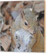 Homosassa Springs Squirrel 2 Wood Print