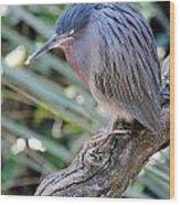 Homosassa Springs Waterfowl 10 Wood Print