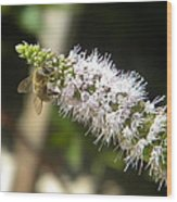 Honey Bee 3 Wood Print