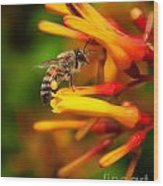 Honey Bee 4 Wood Print