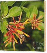Honey Bee 6 Wood Print