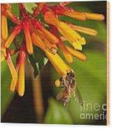 Honey Bee 7 Wood Print