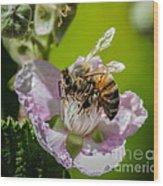 Honey Bee And Blackberry Wood Print