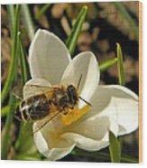Honey Bee And Crocus Wood Print