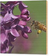 Honey Bee And Lilac Wood Print