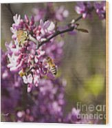 Honey Bee And Redbud Wood Print