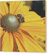 Honey Bee And Yellow Dahlia Flower Wood Print