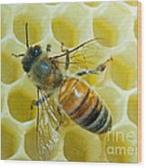 Honey Bee In Hive Wood Print