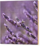 Honey Bee In Lavender Wood Print