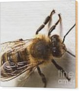 Honey Bee  Wood Print
