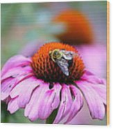Honey Bee On A Pink Daisy Wood Print