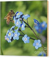 Honey Bee On Forget-me-not Flowers Wood Print