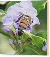 Honey Bee On Lavender Flower Wood Print