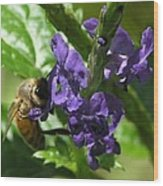 Honey Bee On Purple Flower Wood Print