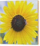 Honey Bee On Wildflower Wood Print