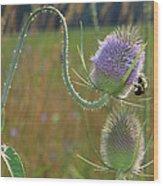 Honey Bee Picks Up Pollen Wood Print