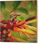 Honey Bee Profile Wood Print
