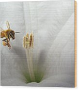 Honey Bee Up Close And Personal Wood Print