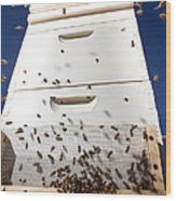Honey Bees and Beehive Wood Print