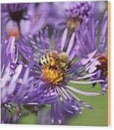 Honeybee And Aster Wood Print