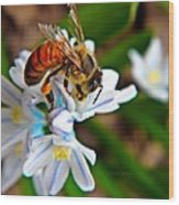 Honeybee And Squill Wood Print