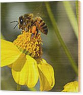 Honeybee Feasting On Nectar Of Yellow Flower Wood Print