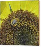Honeybee In A Sunflower  Wood Print